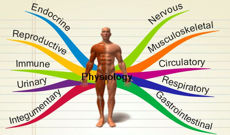Exercise Physiology best things to study in college